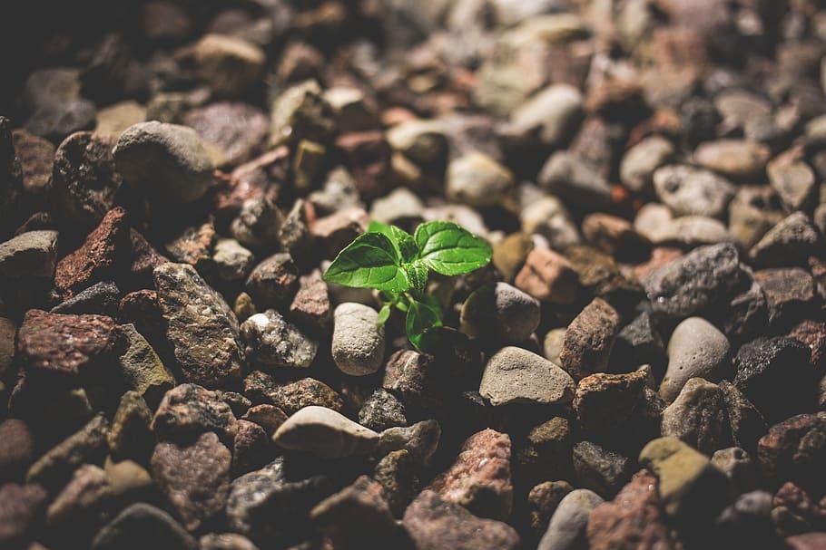 Resilienssistä voimaa muutokseen