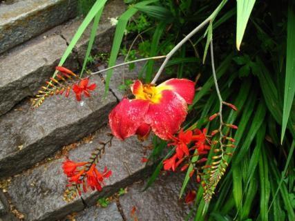 Punaisia kukkasia portaiden äärellä